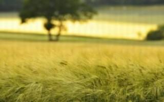 Можно ли строить дачные дома на земле сельхозугожий